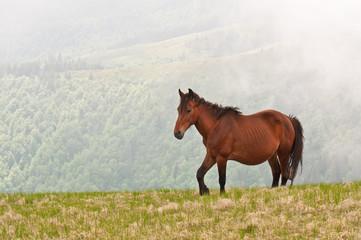 brown wild horse