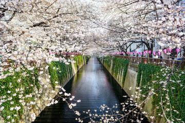 Staande foto Tokyo tokyo, Japan at Meguro canal in the spring.