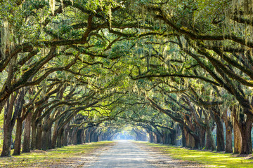 Photo sur Aluminium Bestsellers Country Road Lined with Oaks in Savannah, Georgia