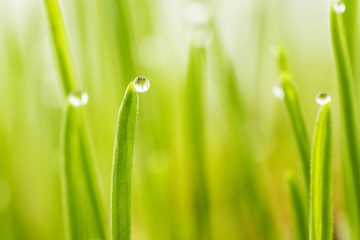 Drop on grass