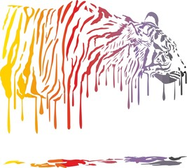 Tiger, abstract color painting on a white background