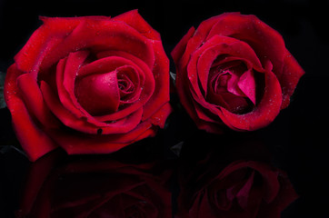 red rose  flower with reflection on black surface background