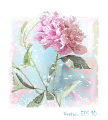 hand drawn  watercolor pink peony flower