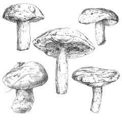 Vector set of hand drawn mushrooms