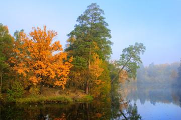 Fall forest near lake