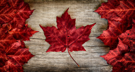 Poster Canada Canadian Flag made out of real Maple Leaves on a Cedar backing