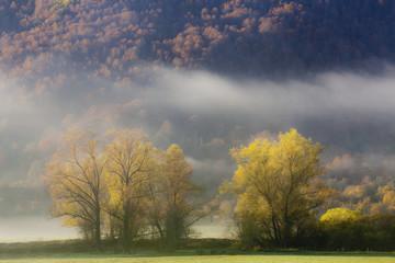 Alberi all'alba con la nebbia