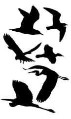 Birds - silhouette 1