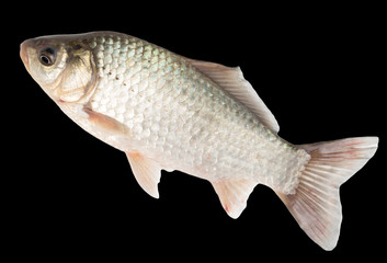 fish on a black background