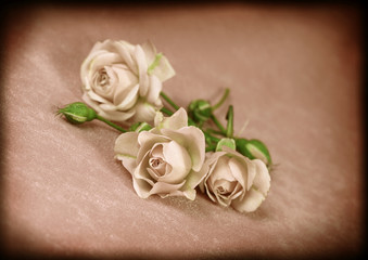 Beautiful flowers rose in vintage style