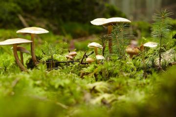 Pilze auf einem bemoosten Waldboden