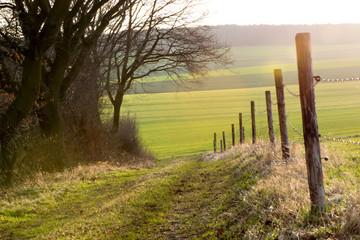 along a paddock fence