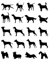 Black silhouettes of different breeds of dogs, vector