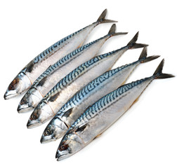 Fresh mackerel fishes