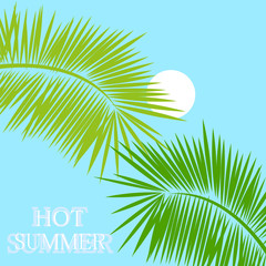 hot summer tropical background