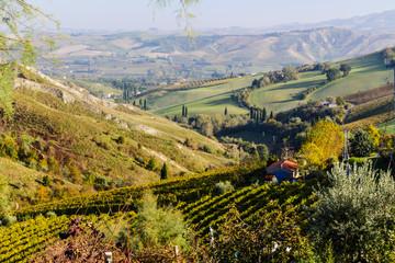 Keuken foto achterwand Wijngaard Autumnal Vineyards on badlands