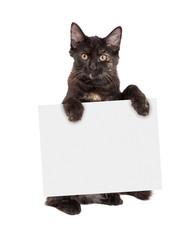 Wall Mural - Black Kitten Holding Blank Sign