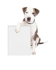 Fototapete - Pit Bull Dog Holding Blank Sign