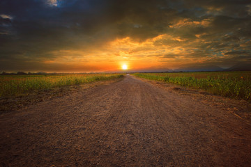 beautiful land scape of dusty road perspective to sun set sky wi Wall mural