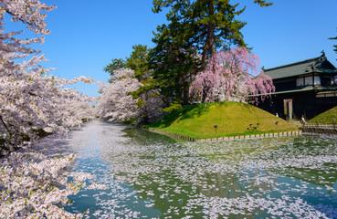 Cherry blossoms at the Hirosaki Castle Park in Hirosaki, Aomori,