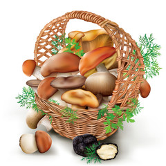 mushrooms in a wicker basket