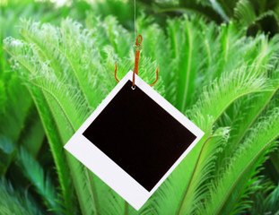 Photo on fish hook on green bush background