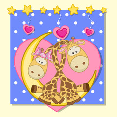Lovers Giraffes