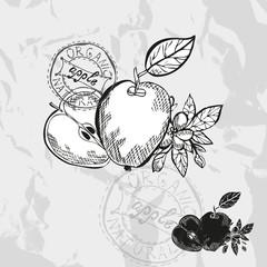 hand drawn fruits
