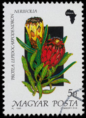 Stamp printed in Hungary, shows Flower Protea lepidocarpodendron