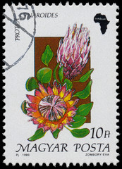Stamp printed in Hungary, shows Flower Protea cynaroides