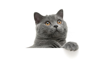 cat with yellow eyes on a white background sits behind a white b