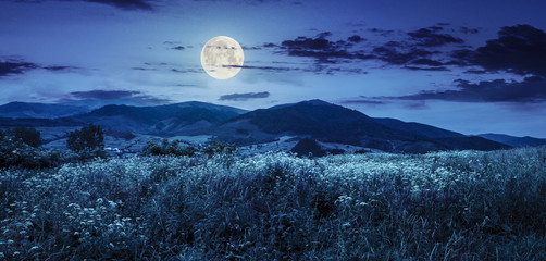 meadow with flowers in mountains at night