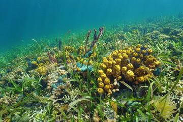 Colorful ocean floor with sea sponge on coral reef