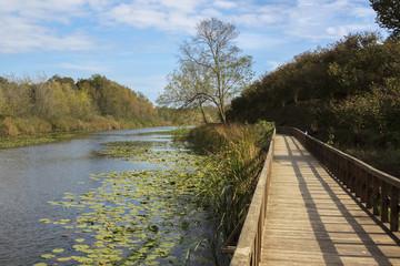 Acarlar Swamp Trail