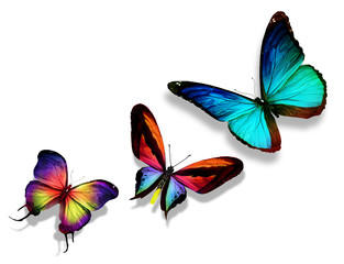 Three color butterflies, isolated on white background