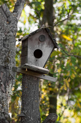 bird house on a tree - vertical view