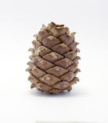 pine cone macro isolated