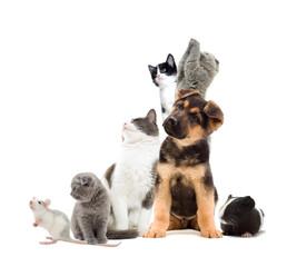 Wall Mural - Pets  looking