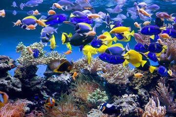 Аквариум с рыбками - fototapety na wymiar