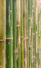 green bamboo fence background texture pattern