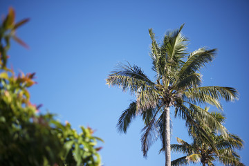 Palm tree on the beach during bright day
