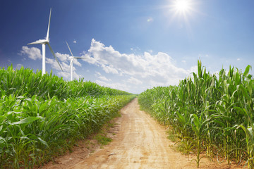 Wall Mural - wind energy plant and corn