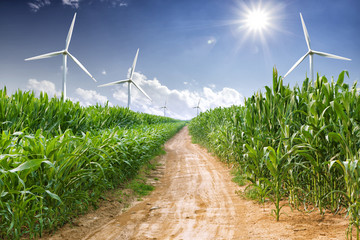 Wall Mural - wind energy plant and corn field