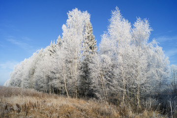 Beautiful landscape with trees covered with hoarfrost