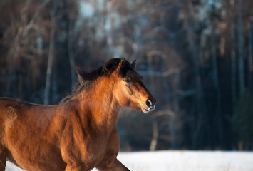 Wall Mural - Horse in winter