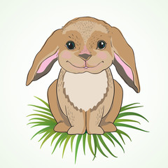 Cute bunny with big ears on green grass