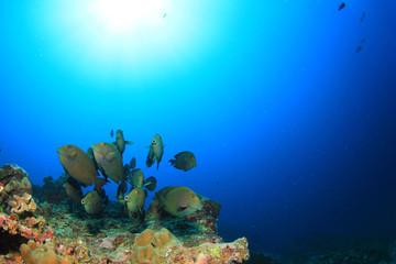 Coral Reef and Fish school underwater in ocean