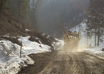 ciężarówka wywożąca drewno z lasu