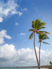 Two palm trees on sandy beach. Coast of Atlantic ocean
