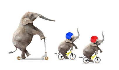 Funny elephant's family bicycling. Road safety concept.